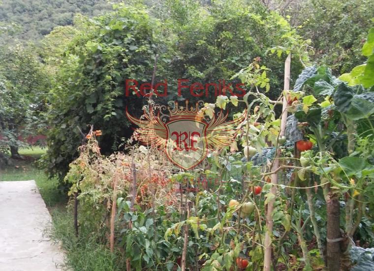 Зеленая шикарная усадьба в 100 метрах от моря, Моринь, 20 км от Котора, Дом в Которский залив Черногория